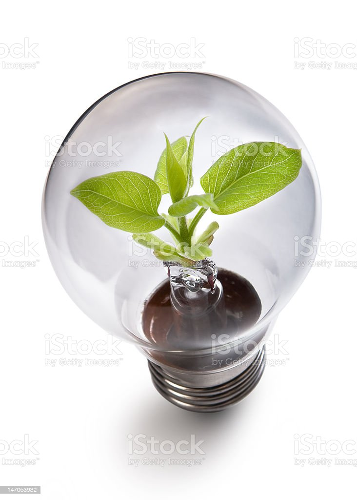 sprout inside the light bulb royalty-free stock photo