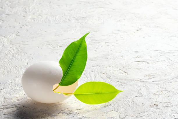 Brotar hojas verdes planta de cáscara de huevo concepto de renacimiento - foto de stock