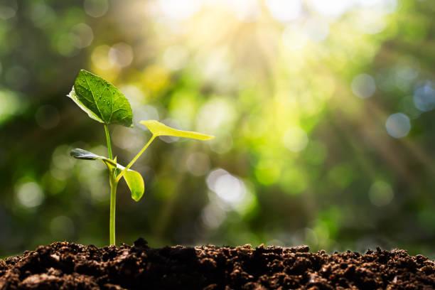 yumuşak güneş ışığı arka plan, çevre kavramı ile bulanık yeşil bokeh filiz - plants stok fotoğraflar ve resimler
