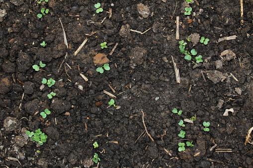 Sprout 0명에 대한 스톡 사진 및 기타 이미지