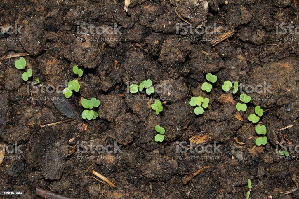 Germe - Photo de Agriculture libre de droits
