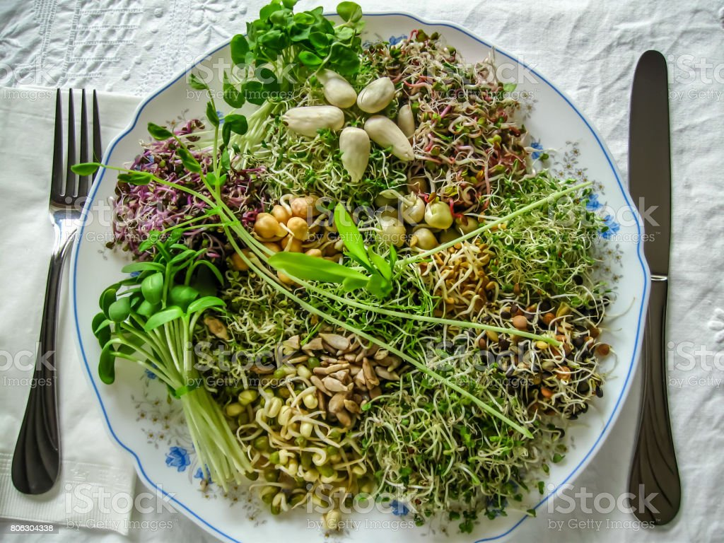 Sprout salad stock photo