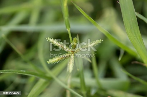 Sprout seed and green leaf. Fresh baby young plant growing in outdoor natural sunlight in vegetable garden field environment. Springtime outdoor macro photography. Beginning of new life grow concept.