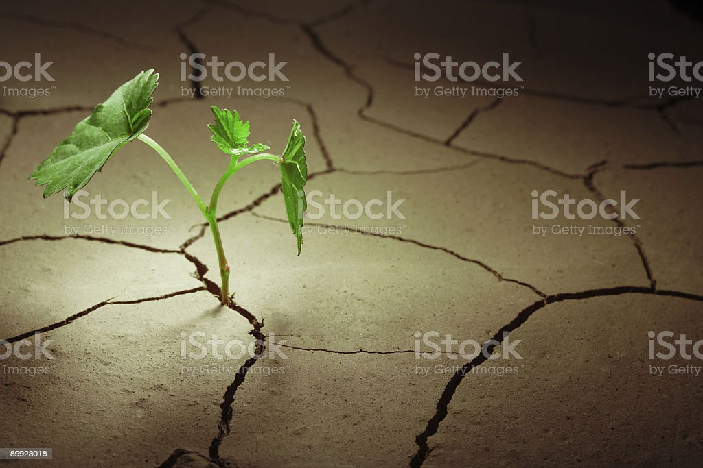 sprout vine in droughty ground stock photo
