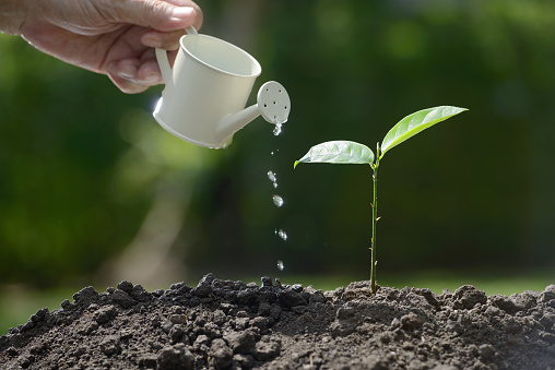 915680272 istock photo Sprout watered from a watering can on nature background 686890226