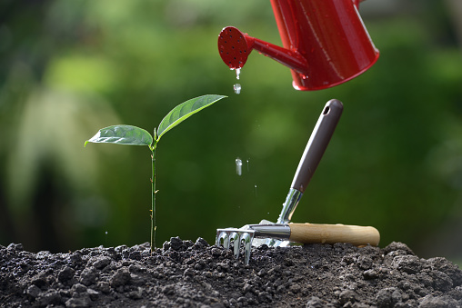 915680272 istock photo Sprout watered from a watering can on nature background 686890352