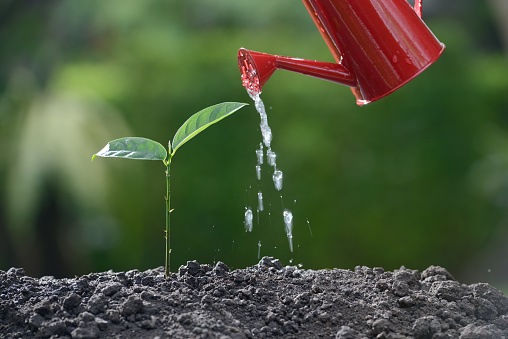 915680272 istock photo Sprout watered from a watering can on nature background 686890356