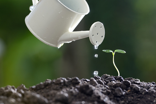 915680272 istock photo Sprout watered from a watering can on nature background 686890452