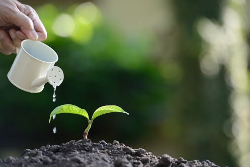 915680272 istock photo Sprout watered from a watering can on nature background 686892622