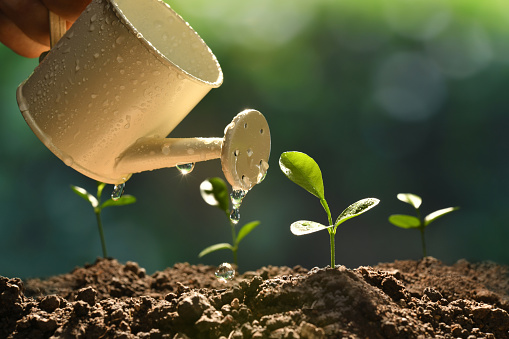 915680272 istock photo Sprout watered from a watering can on nature background 937601742