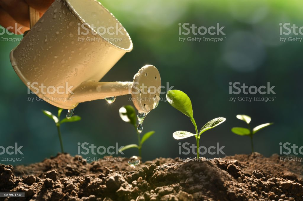 Sprout watered from a watering can on nature background stock photo