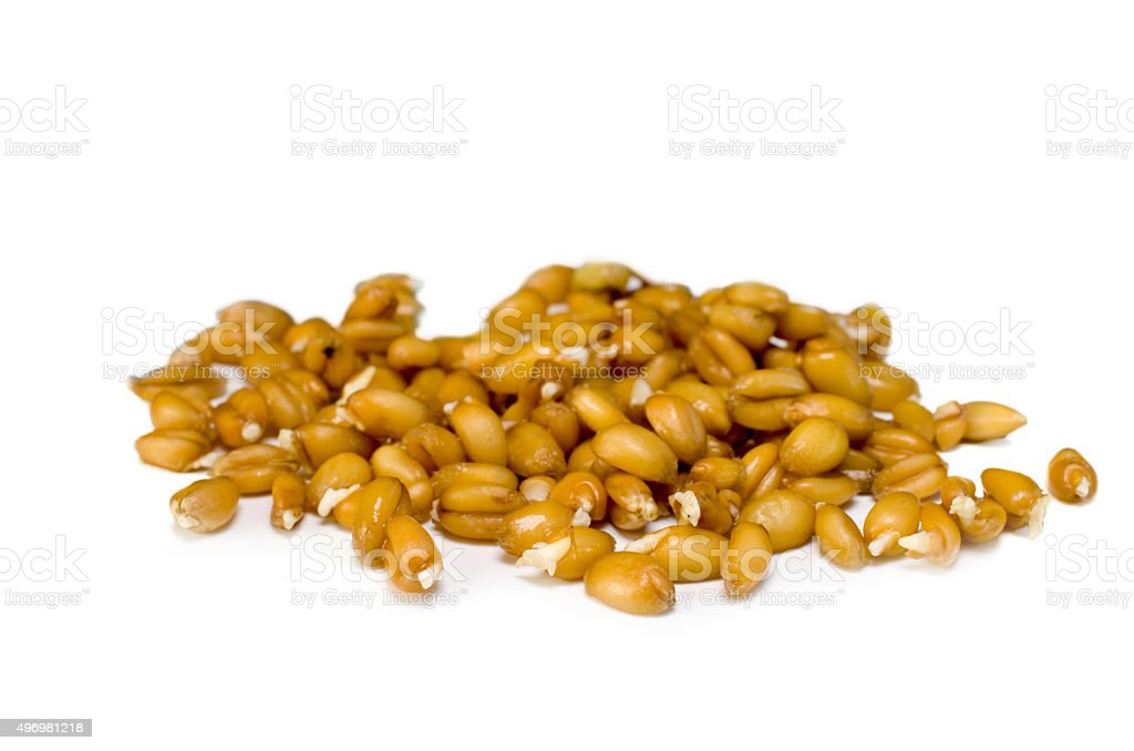 sprouted grains stock photo