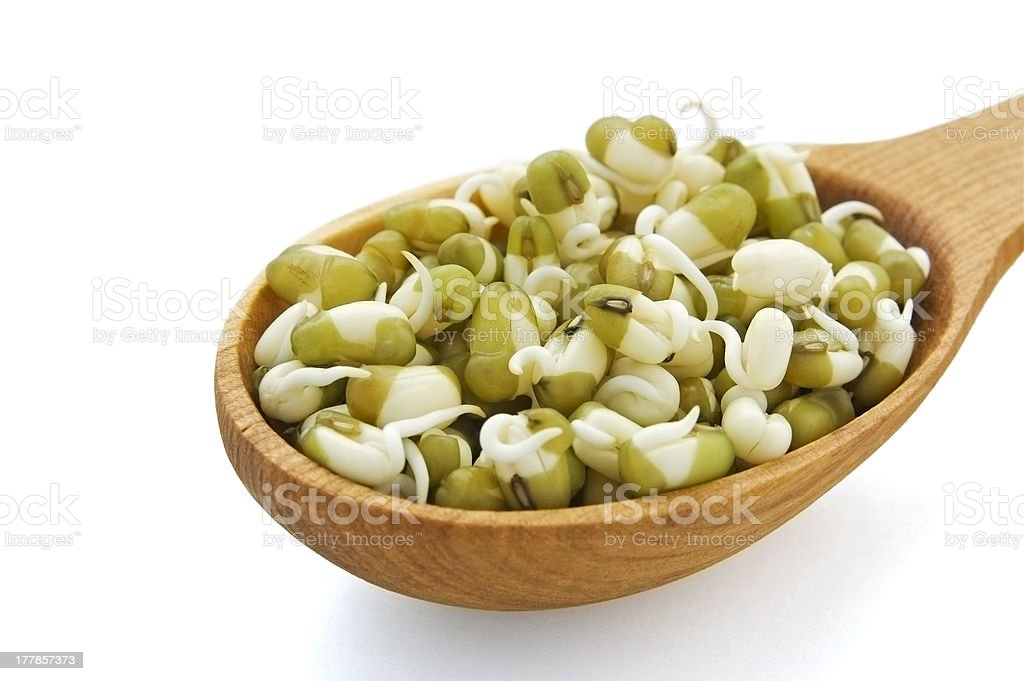 Sprouted mung beans royalty-free stock photo