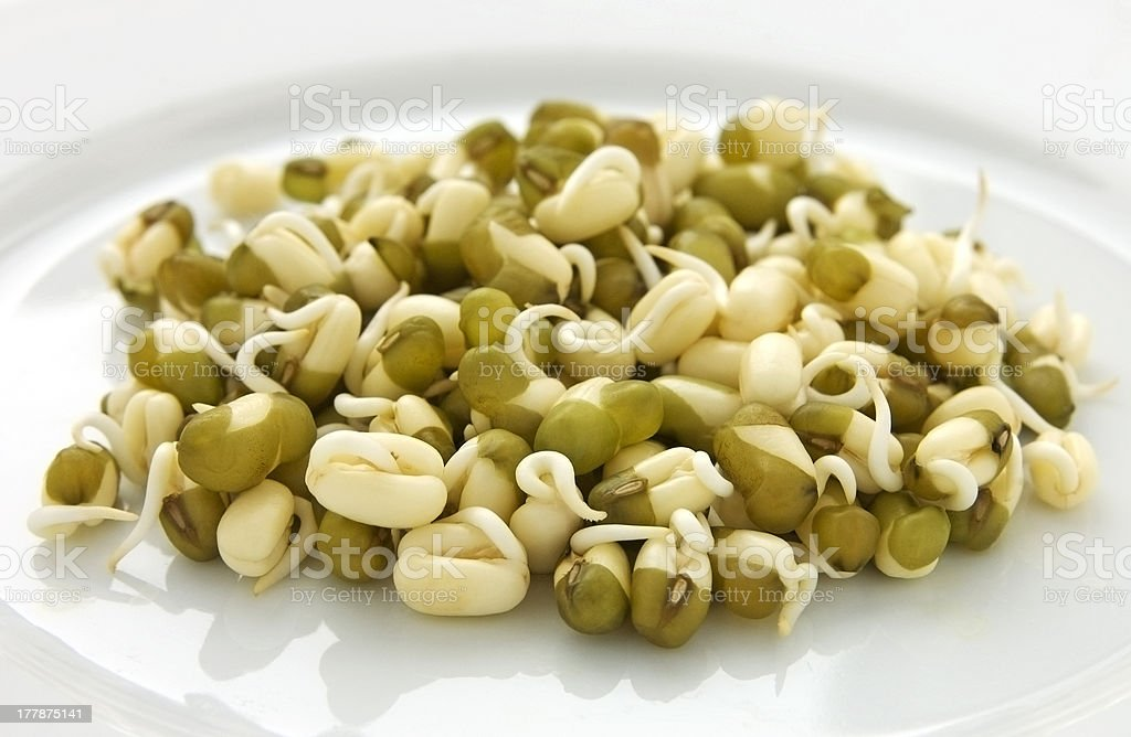 Sprouted mung beans stock photo