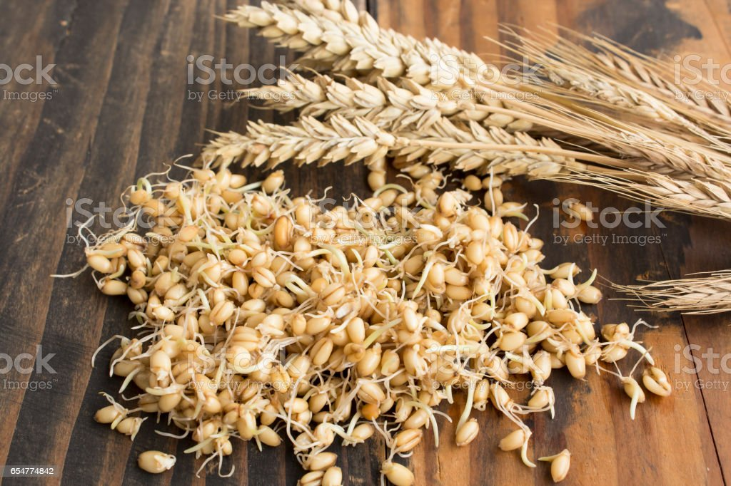 Sprouted Wheat and Ear of Wheat stock photo