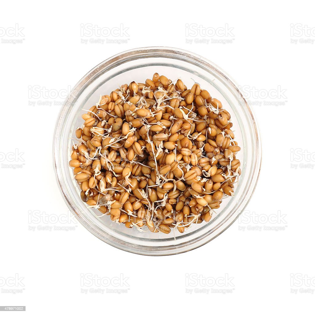 Sprouted wheat in the glass bowl isolated on white background stock photo