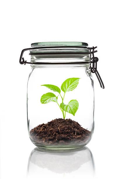 sprouting pflanze in ein gefäß geschlossen - terrarienpflanzen stock-fotos und bilder