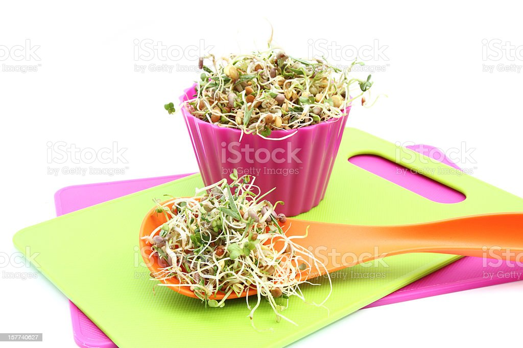 Sprouts in colorful containers stock photo