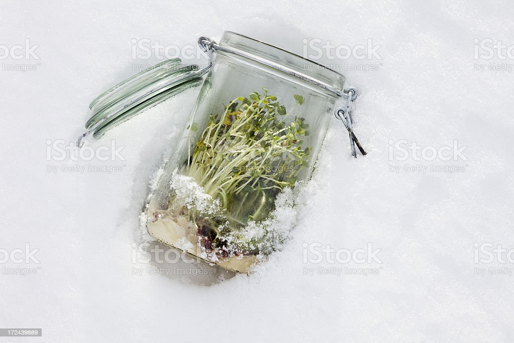 Sprouts jar in winter stock photo