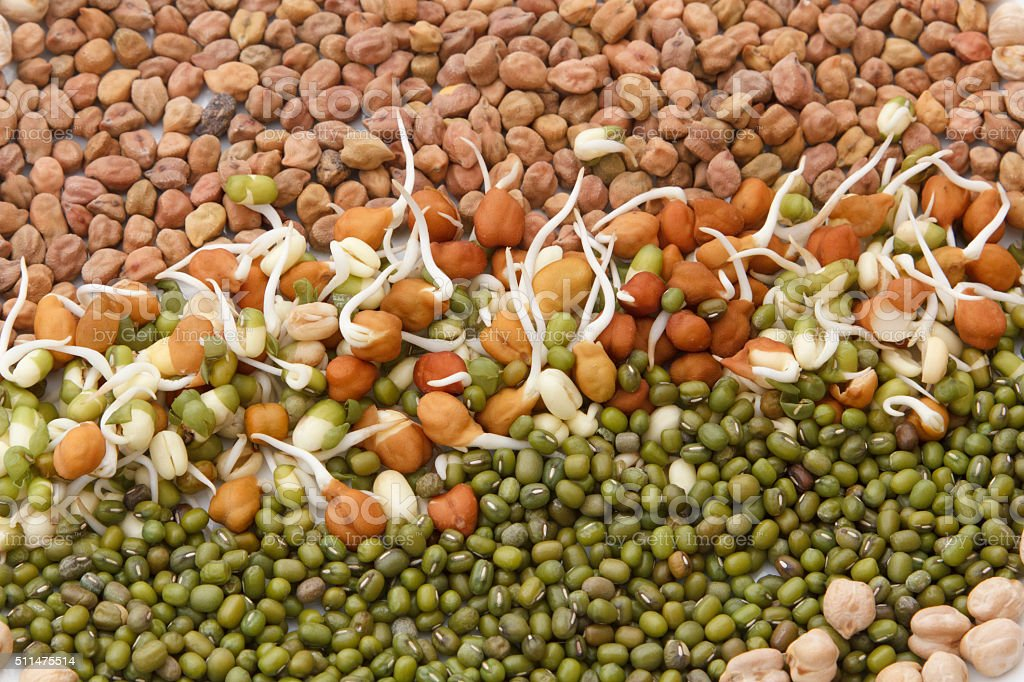 sprouts of gram and Lentil stock photo