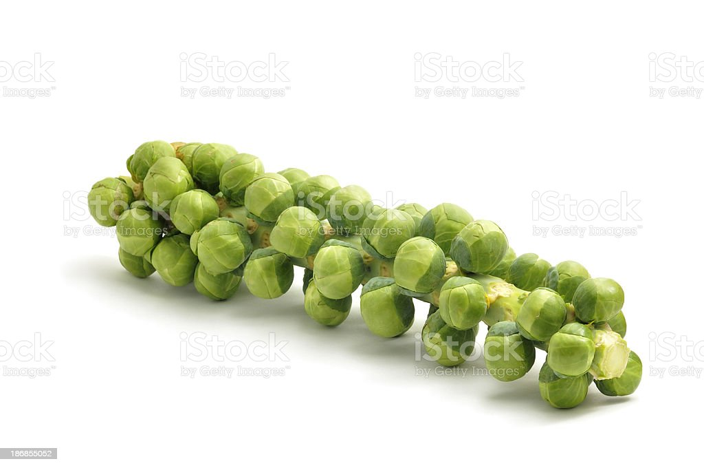 Sprouts on a Stalk stock photo