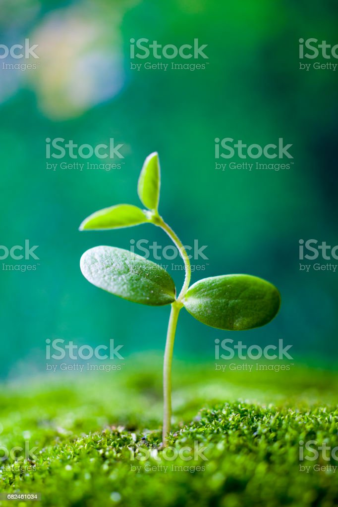 Sprouts on green moss stock photo