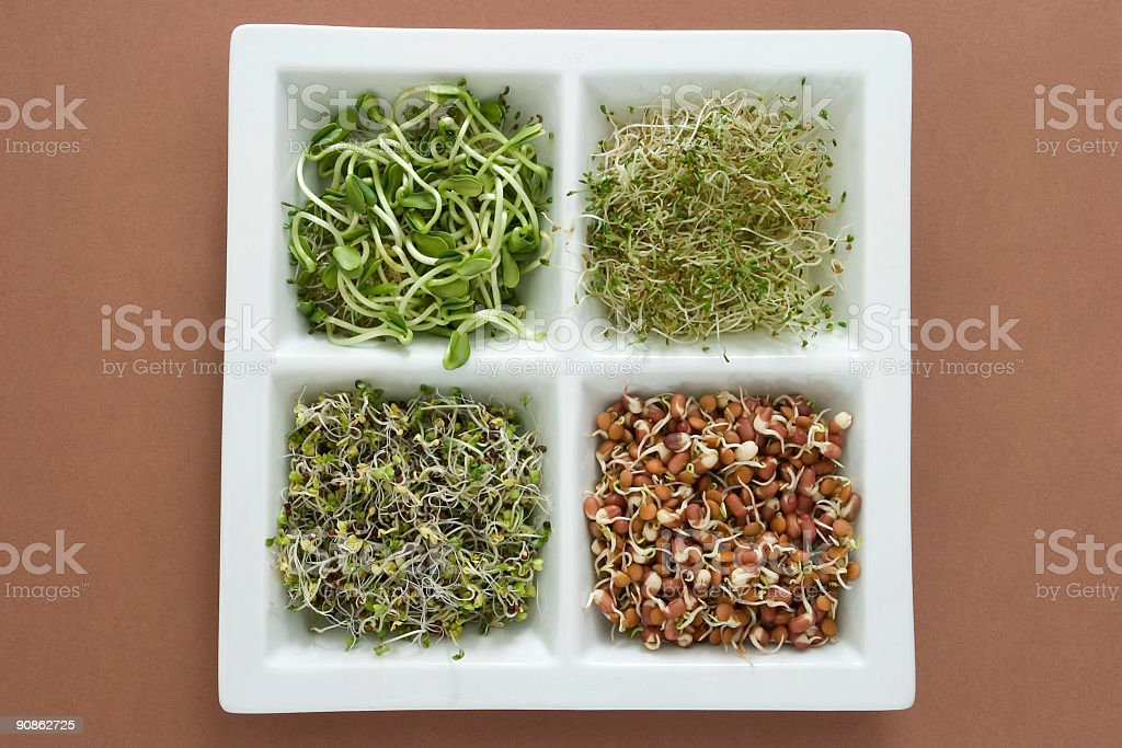 Sprouts selection stock photo