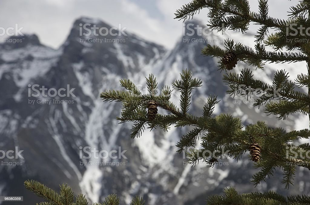 Spruce and Mountains royalty-free stock photo