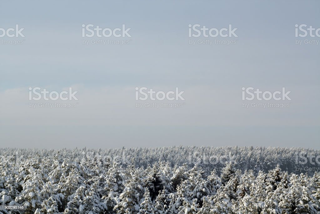 Spruce forest covered by snow against sky. stock photo