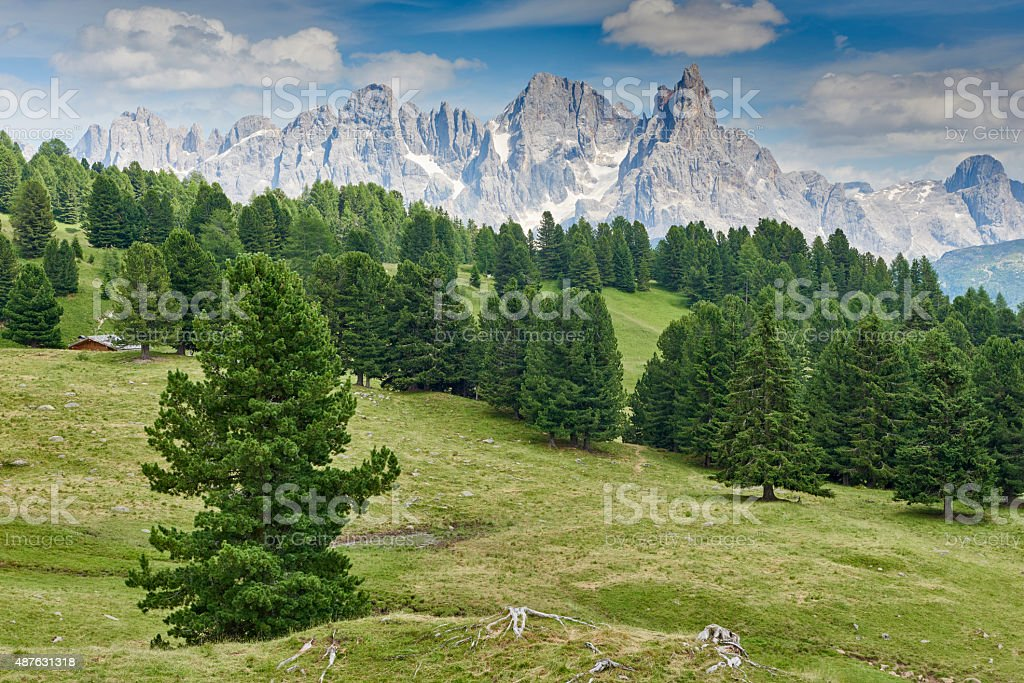 Spruce Forest In The Dolomites stock photo