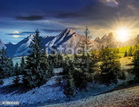 1074120624 istock photo spruce forest on grassy hillside in tatras 678800430