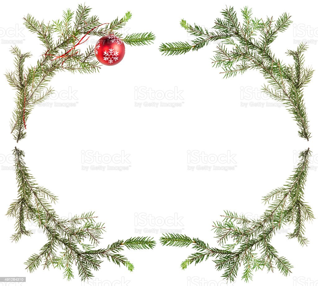 spruce tree branches with red ball on white stock photo
