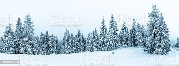 Photo of Spruce Tree Forest Covered by Snow in Winter Landscape