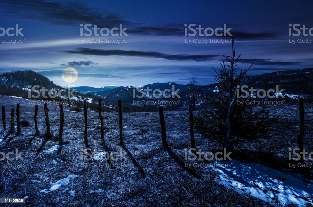 spruce tree on a hillside in springtime at night stock photo