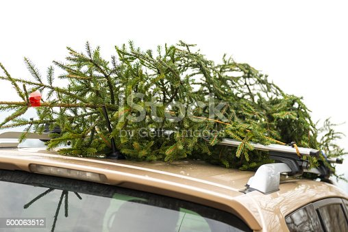 Small spruce tree tied on the roof of the car, wich is partly visible. Spruce tree for christmass tree at home.