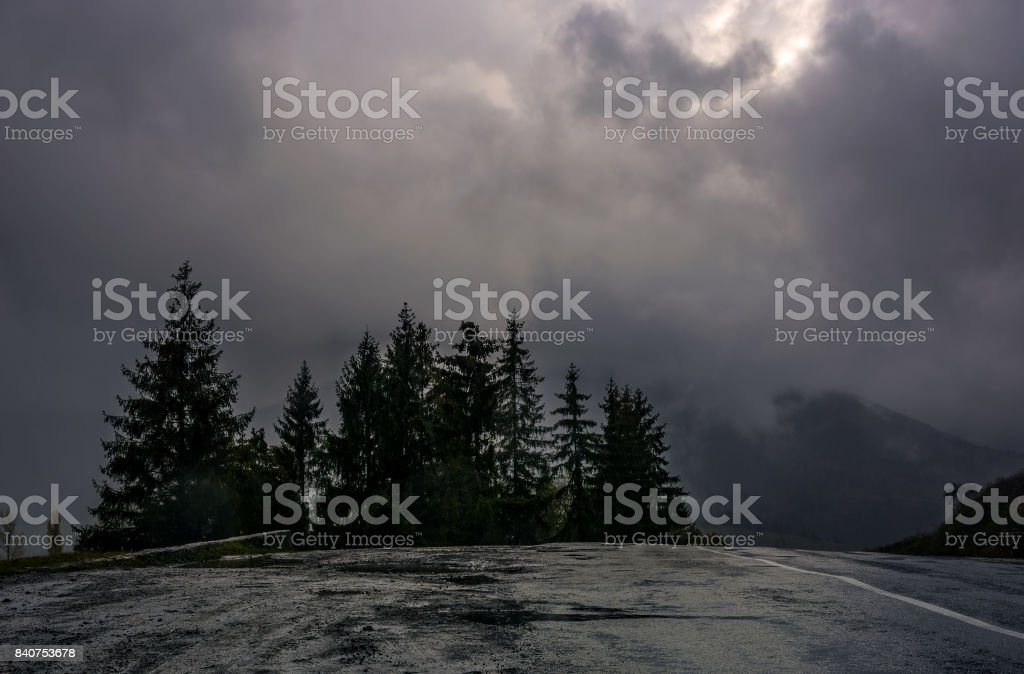 spruce trees by the road in high mountains stock photo