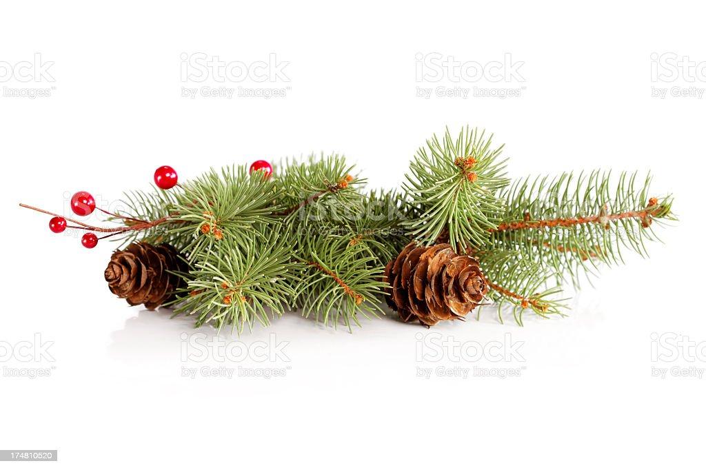 Spruce twig decoration stock photo