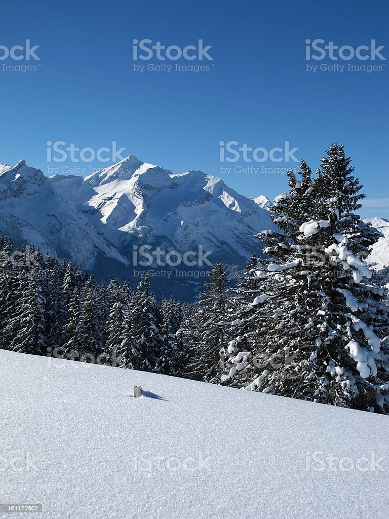 Spruces and mountain named Oldenhorn royalty-free stock photo