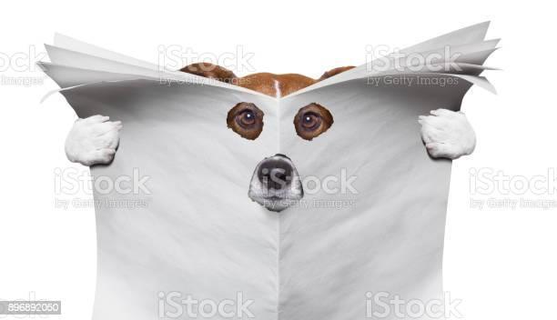 Spy dog reading a newspaper picture id896892050?b=1&k=6&m=896892050&s=612x612&h=b4chbuyvfjzxv5vnupccn8rwjqmilkees4dqqemfdik=