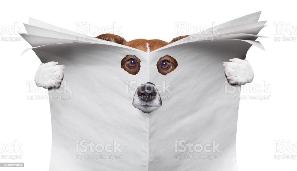 perro espía leyendo un periódico - foto de stock