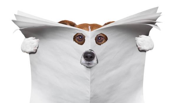 spion-hund eine zeitung lesen - bibliothekschilder stock-fotos und bilder