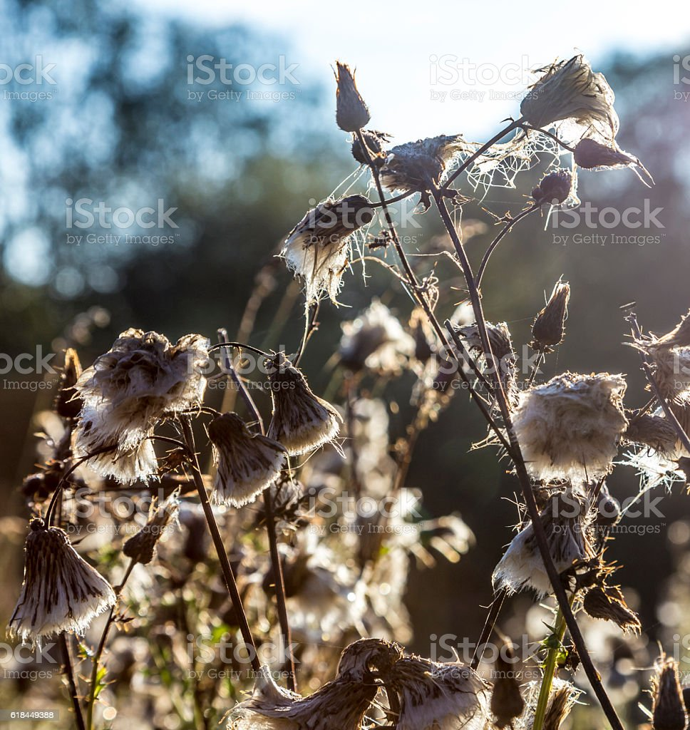spyder net in morning light with wildflowers stock photo