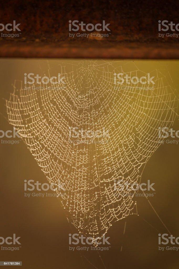 Spyder web full of water stock photo