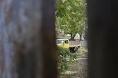 istock Spying on the old yellow truck in the backyard 1126508164