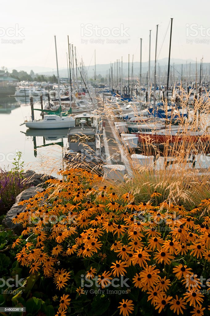 Squalicum Harbor, Bellingham Washington. stock photo