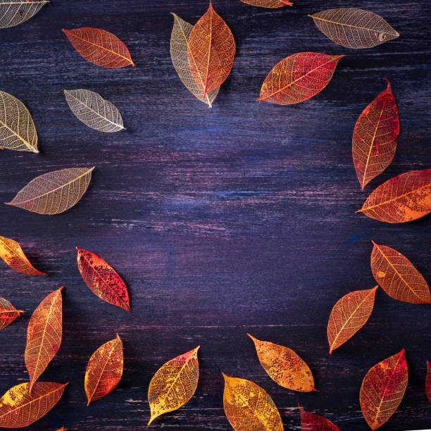 Square autumn design template, a flat lay of fall leaves, for flyers, gift cards and invitations, with a place for text stock photo