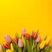Square background with a bouquet of tulips on an yellow background. Flat lay, top view with copyspace. International Women's Day, spring concept.