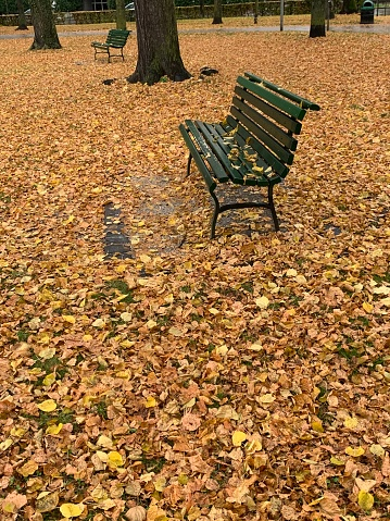 Square bench surrounded by autumn leaves