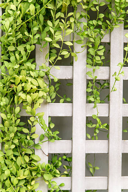 Square fence with creeping vines stock photo
