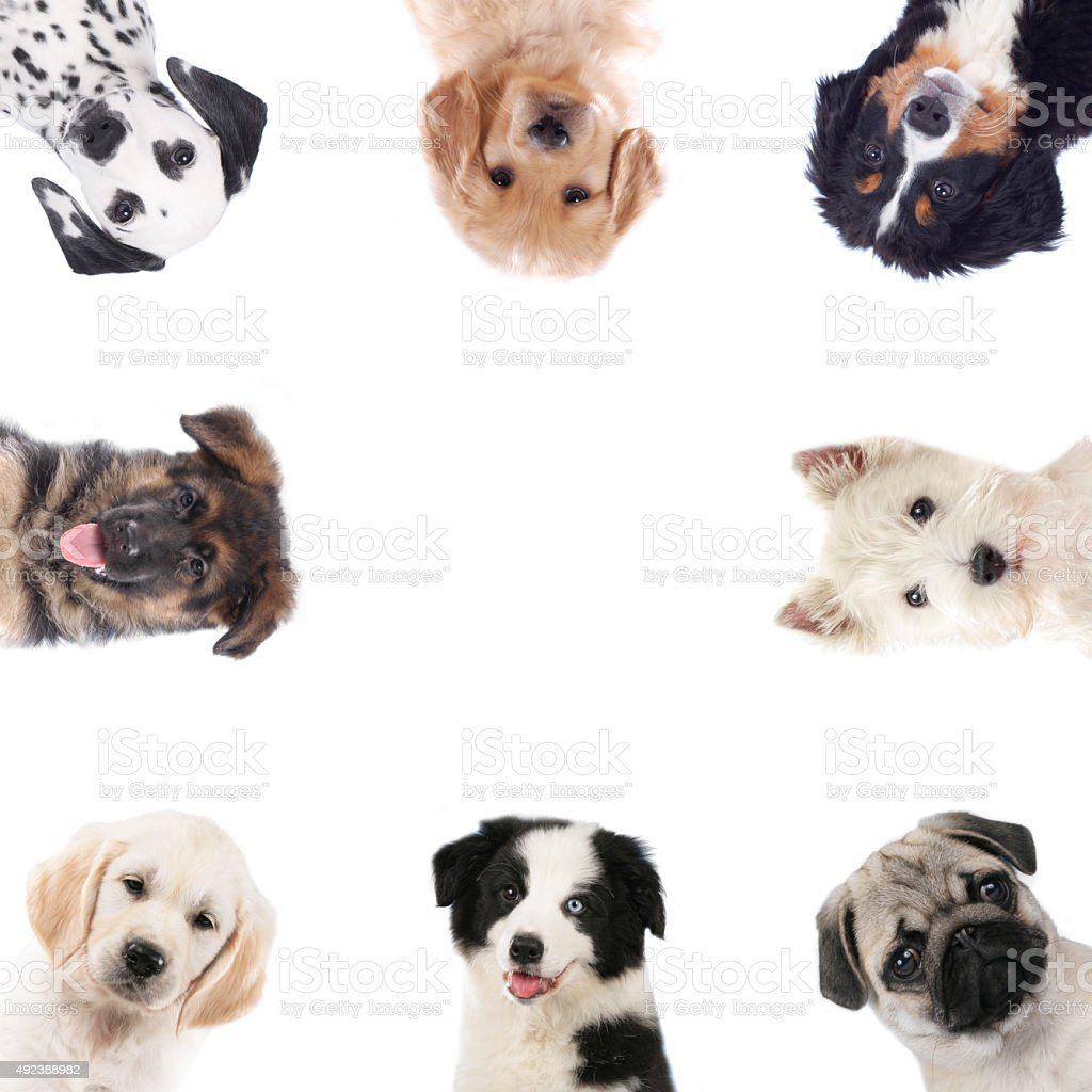 Square frame of different puppies,dogs stock photo